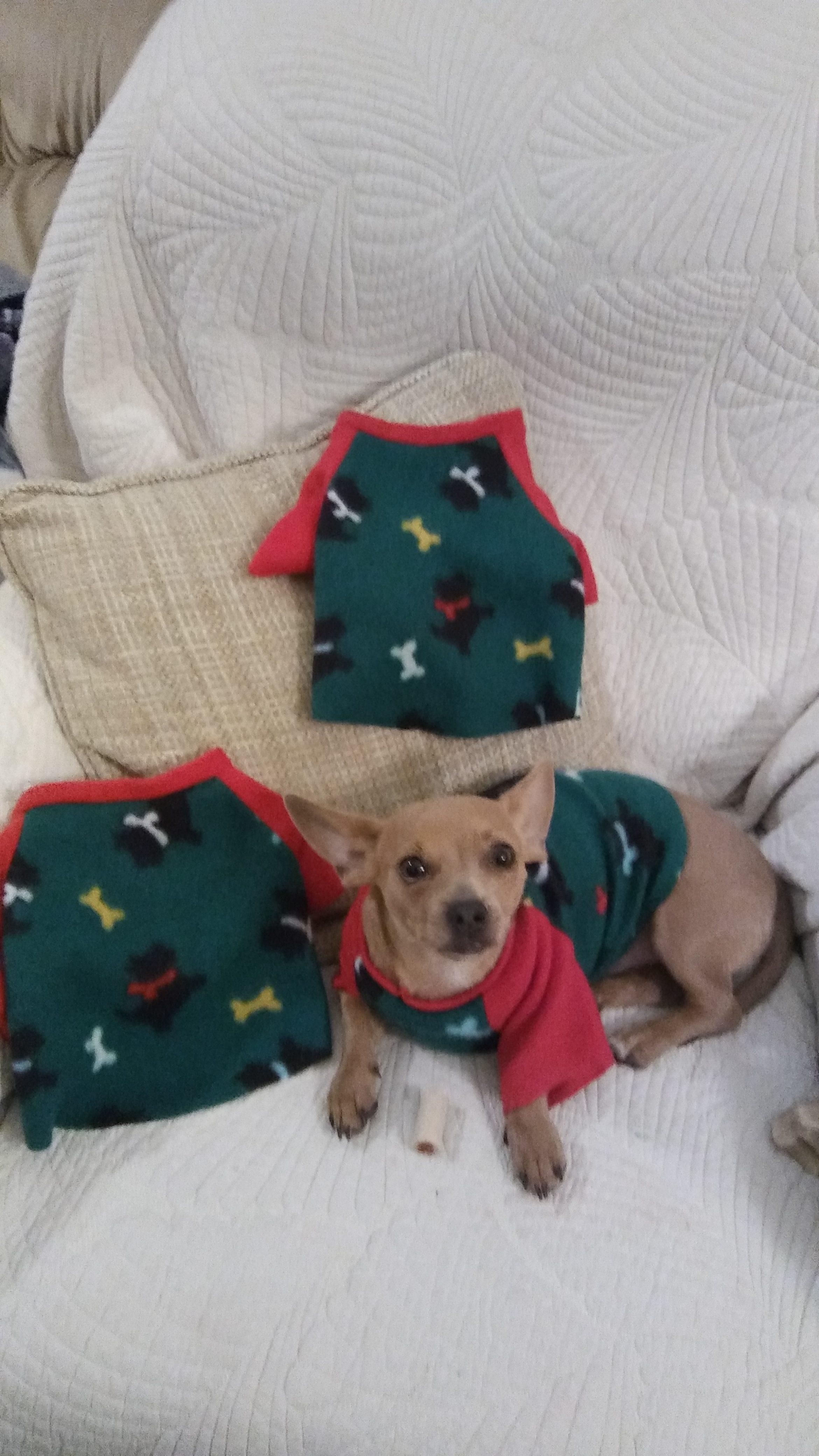 dogshirts